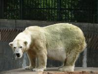 ZOO Ostrava - medved