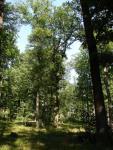 Pomokerske lesy