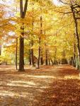 letošní podzim