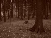 lesík