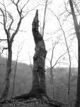 mrtvý strom