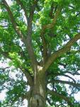 Pamet stromu...