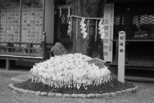 přáníčka v chrámu u divočáka